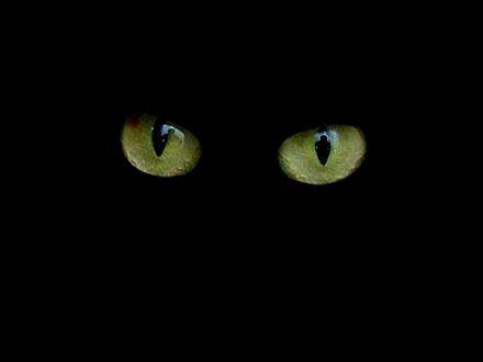 gato184[1].jpg